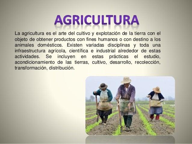 La agricultura es el arte del cultivo y explotación de la tierra con el  objeto de obtener productos con fines humanos o c...