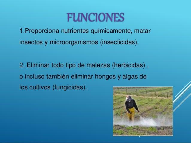 1.Proporciona nutrientes químicamente, matar insectos y microorganismos (insecticidas). 2. Eliminar todo tipo de malezas (...