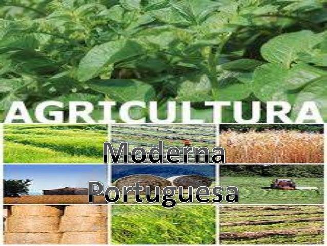 Introdução Neste trabalho iremos mostrar as características da agricultura actual. A agricultura é o conjunto de técnicas ...