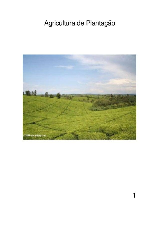 Agricultura de Plantação1