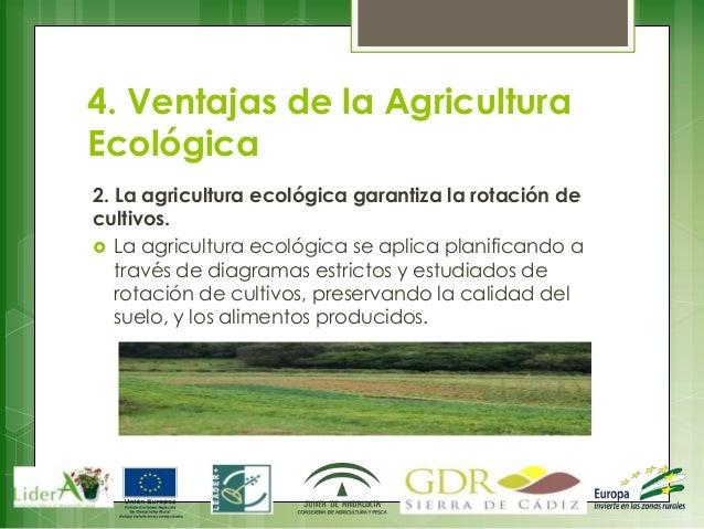 Agricultura ecol gica alvaro fern ndez reina for Rotacion cultivos agricultura ecologica