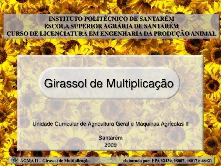 INSTITUTO POLITÉCNICO DE SANTARÉM           ESCOLA SUPERIOR AGRÁRIA DE SANTARÉM CURSO DE LICENCIATURA EM ENGENHARIA DA PRO...