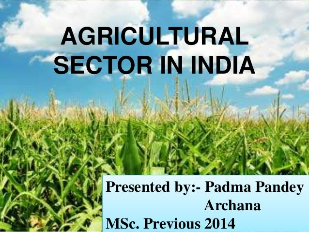 AGRICULTURAL  SECTOR IN INDIA  Presented by:- Padma Pandey  Archana  MSc. Previous 2014