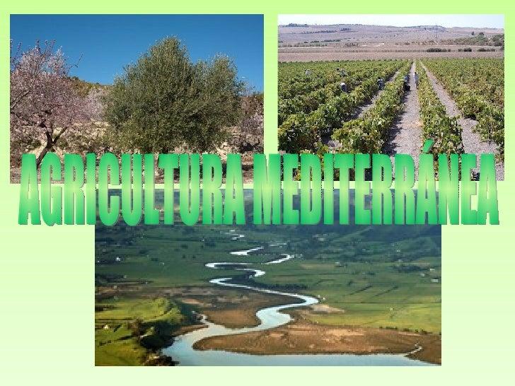 LOCALIZACIÓN DEL CLIMA    MEDITERRÁNEO