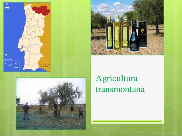 Agricultura transmontana
