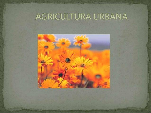 Es la practica agrícola que se realiza en espacios de  vivienda urbana con al adecuación de área productivas, en patios,...