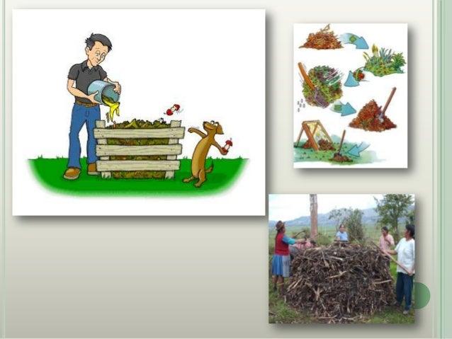 Agricultura Urbana Grupo 2
