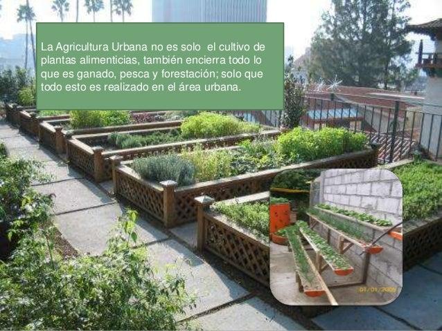 La producción dealimentos en áreasurbanas creaeconomías localesfuertes al crearpuestos de trabajo