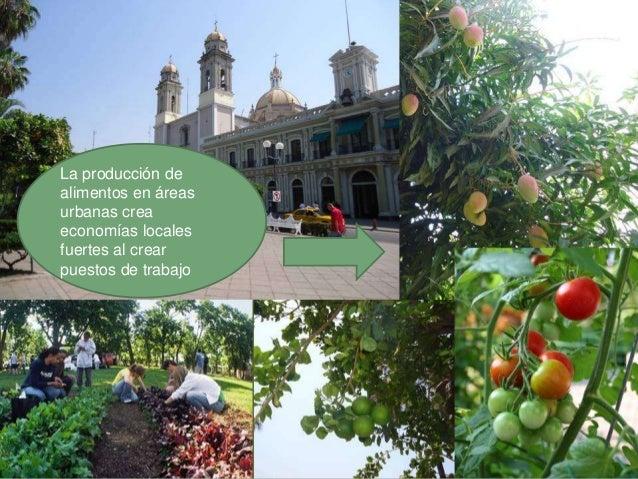 La agricultura urbana apoya unaproducción mas sustentable dealimentos que intenta hacer decaer eluso de pesticidas peligro...