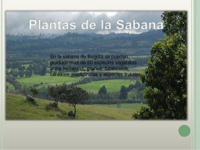 Algunas de las plantasornamentales que podemosencontrar en la Sabana de                    oAlgunas de todas estasBogotá s...