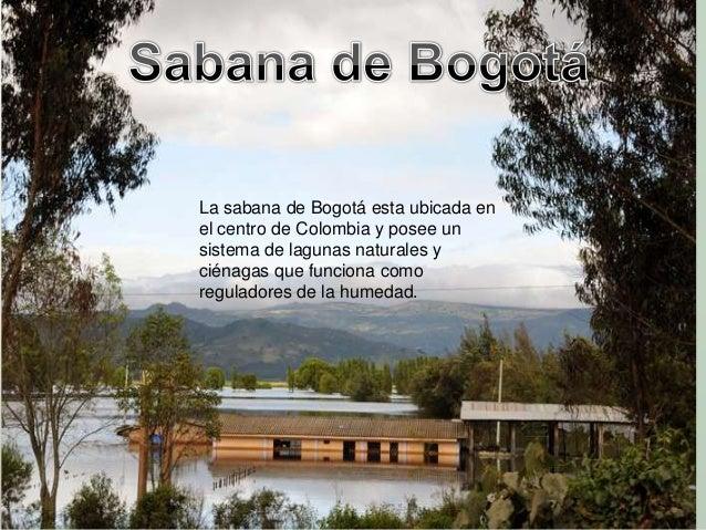 En la sabana de Bogotá se puedenproducir mas de 60 especies vegetalesentrehortalizas, granos, tubérculos, cereales, medici...