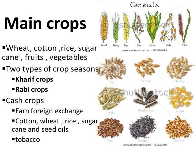 Cash crops of pakistan