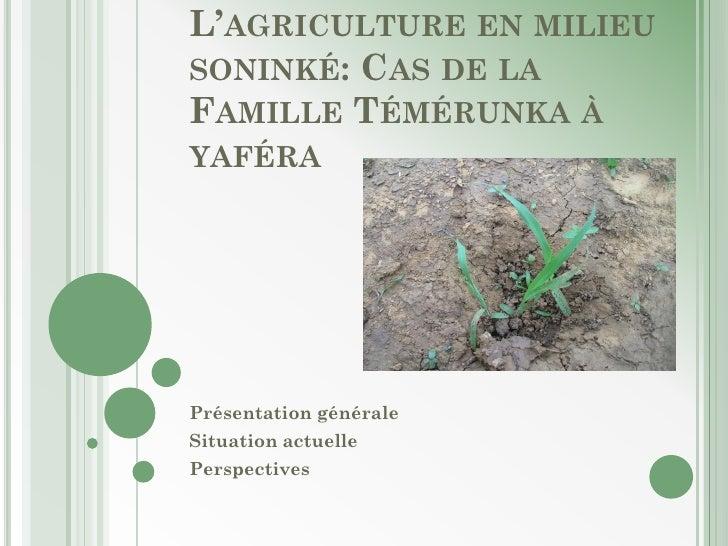 L'AGRICULTURE EN MILIEUSONINKÉ: CAS DE LAFAMILLE TÉMÉRUNKA ÀYAFÉRAPrésentation généraleSituation actuellePerspectives