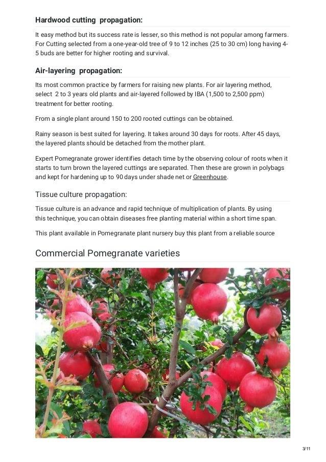 T ultimate guide for pomegranate farming 2018 Slide 3