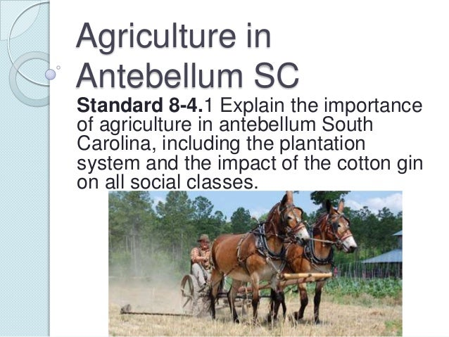 Agriculture in Antebellum SC Standard 8-4.1 Explain the importance of agriculture in antebellum South Carolina, including ...