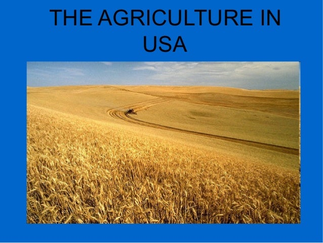 THE AGRICULTURE IN USA