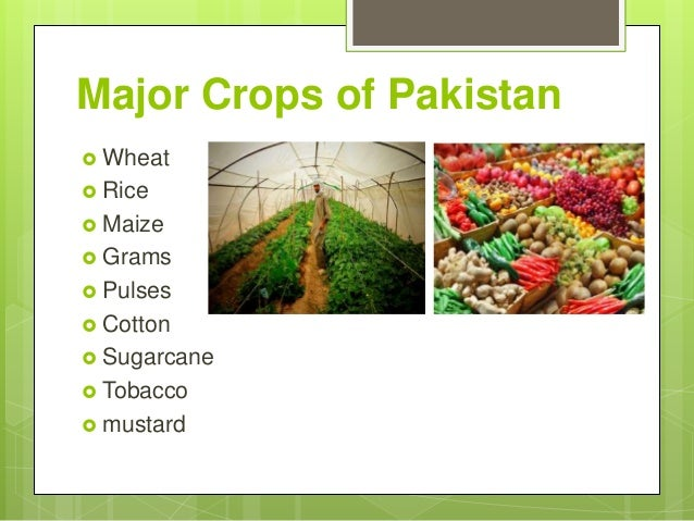 agriculture in pakistan Gdp from agriculture in pakistan increased to 2284561 pkr million in 2017 from 2208087 pkr million in 2016 gdp from agriculture in pakistan averaged 202791533 pkr million from 2006 until 2017, reaching an all time high of 2284561 pkr million in 2017 and a record low of 1775346 pkr million in 2006.