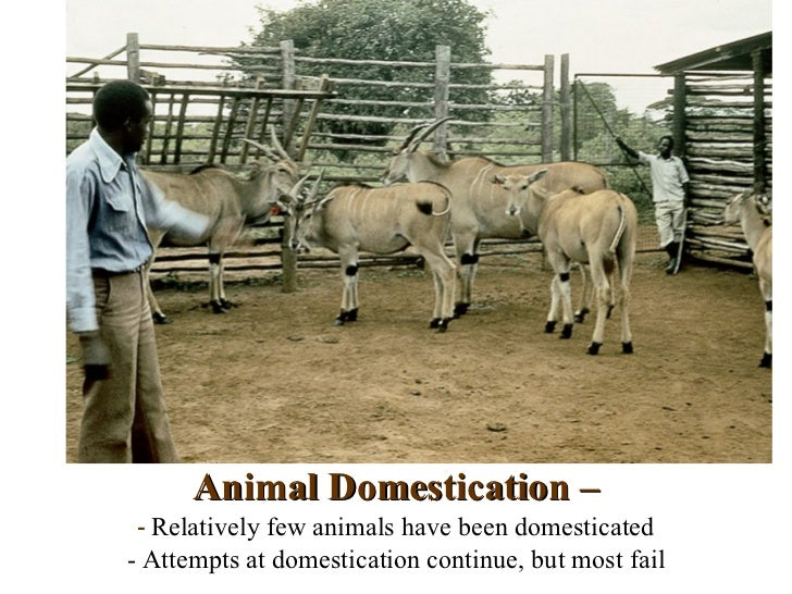 Animal Domestication – - Relatively few animals have been domesticated- Attempts at domestication continue, but most fail