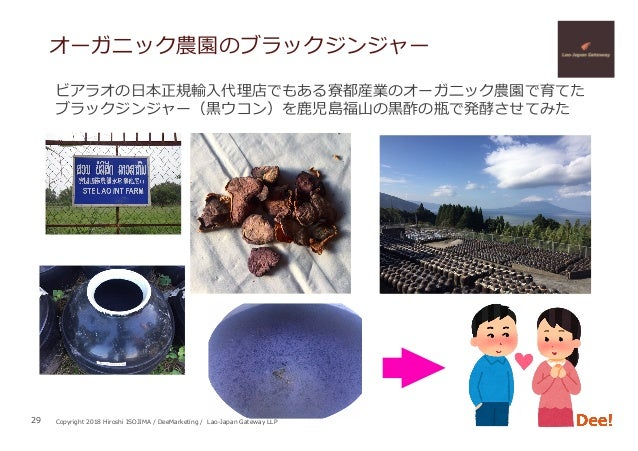 Copyright 2018 Hiroshi ISOJIMA / DeeMarketing / Lao-Japan Gateway LLP オーガニック農園のブラックジンジャー 29 ビアラオの⽇本正規輸⼊代理店でもある寮都産業のオーガニック農...