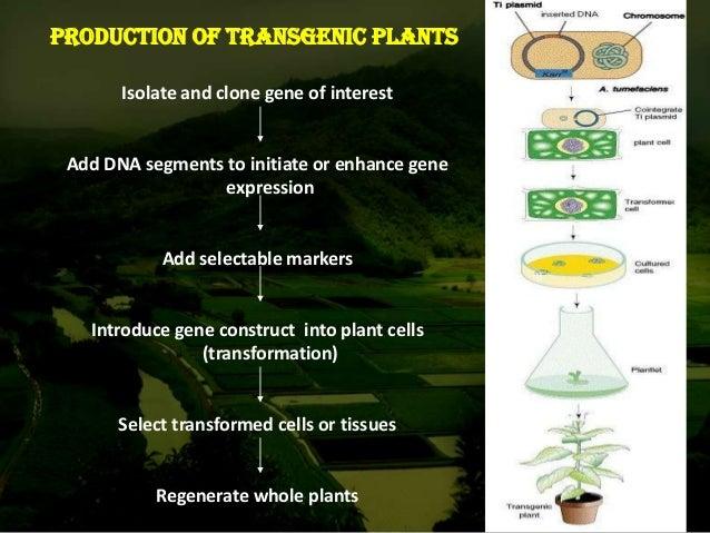 agrobacterium mediated gene transfer