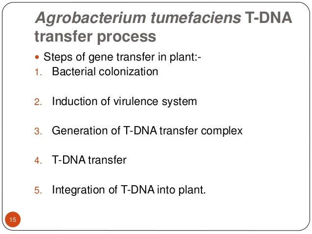 gene transfer using agrobacterium
