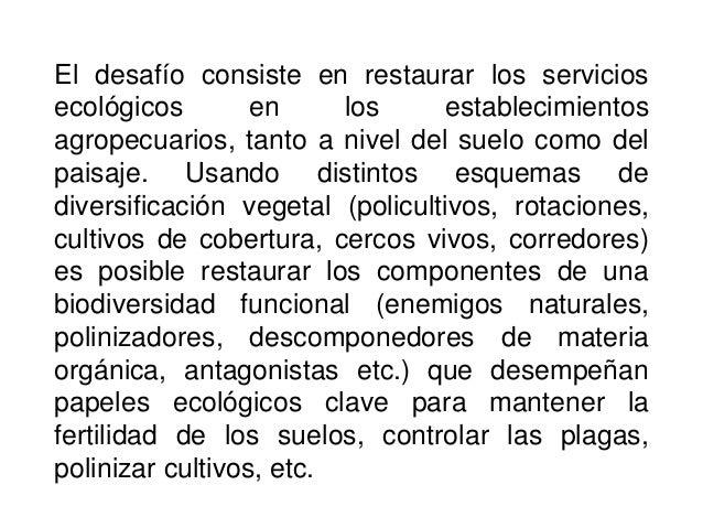 Agroecologia Rotaciones de cultivos ecologicos