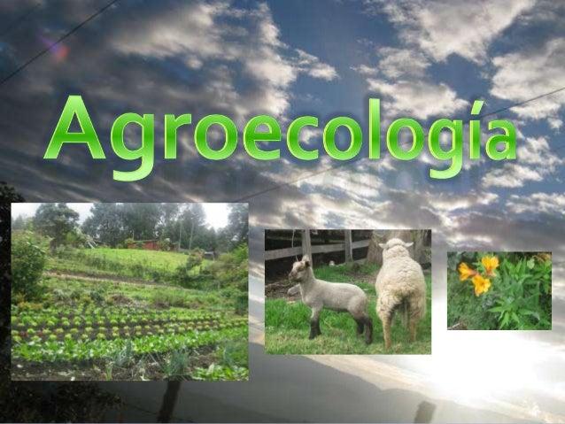 La agroecologíanace como cienciaen los años 70, apartir de losestudios deagrónomos yecólogos,analizando lasinteracciones de
