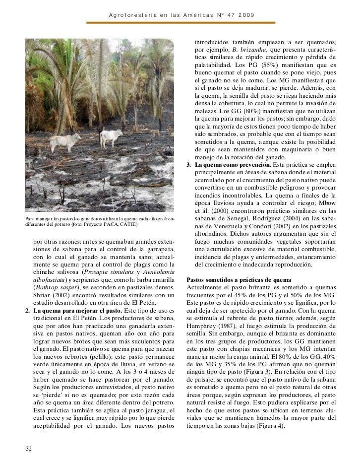 Agroforesteria