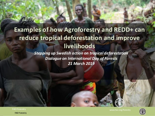FAO Forestry www.fao.org/forestryFAO Forestry Examples of how Agroforestry and REDD+ can reduce tropical deforestation and...