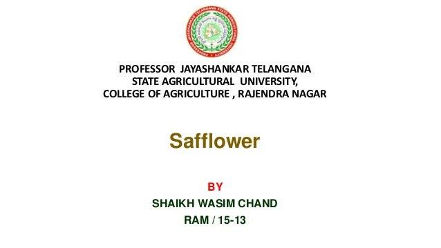 PROFESSOR JAYASHANKAR TELANGANA STATE AGRICULTURAL UNIVERSITY, COLLEGE OF AGRICULTURE , RAJENDRA NAGAR Safflower BY SHAIKH...