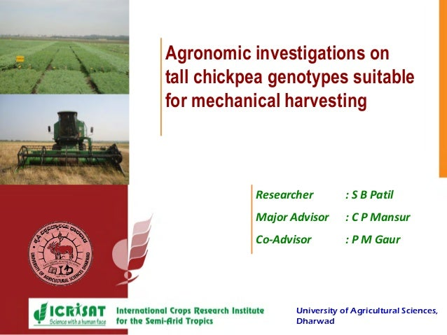 Picture here Agronomic investigations on tall chickpea genotypes suitable for mechanical harvesting Researcher : S B Patil...