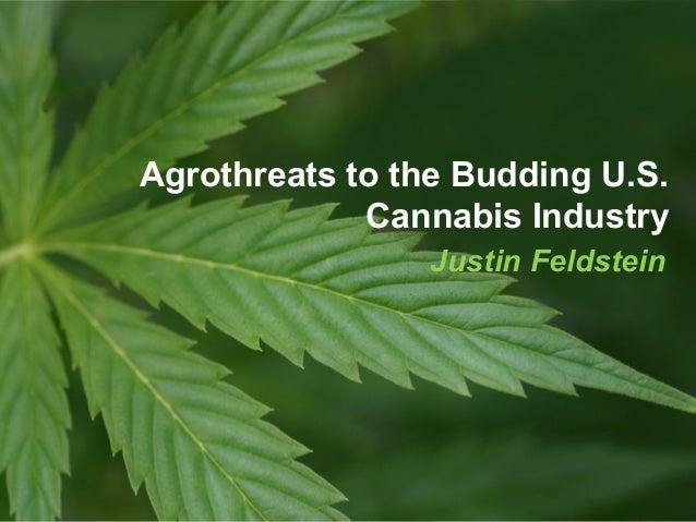 Justin Feldstein Agrothreats to the Budding U.S. Cannabis Industry