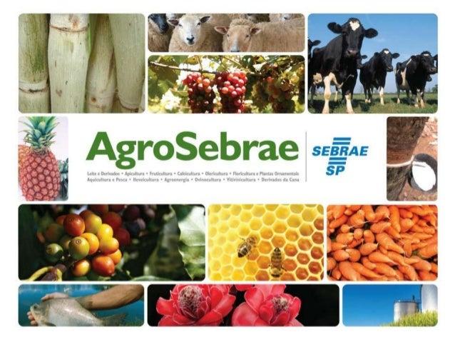 O que é o Programa?Metodologia elaborada pelo SEBRAE-SP coma     finalidade   de    melhorar     acompetitividade dos pequ...