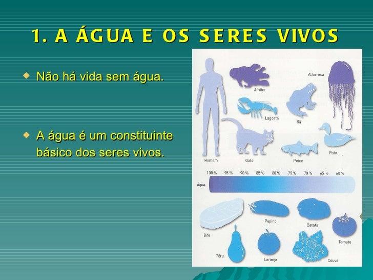 1. A ÁGUA E OS SERES VIVOS <ul><li>Não há vida sem água. </li></ul><ul><li>A água é um constituinte básico dos seres vivos...