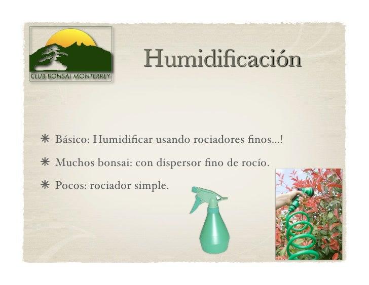Básico: Humidificar usando rociadores finos...!  Muchos bonsai: con dispersor fino de rocío.  Pocos: rociador simple.