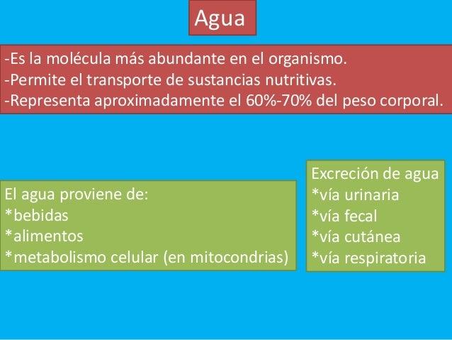 La información del hombre perezoso a Dieta cetogénica