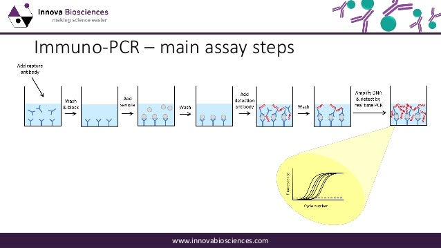 A Guide to Immuno-PCR