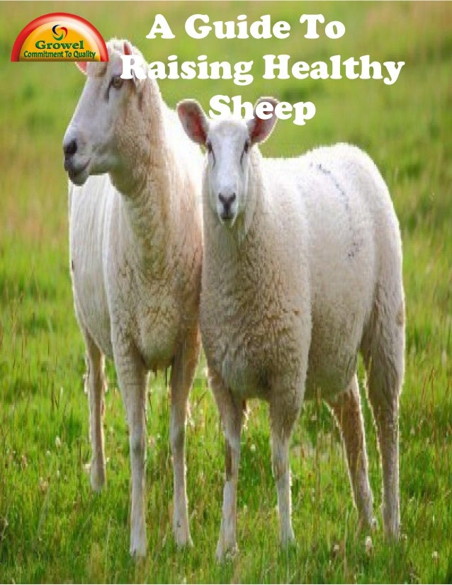 A Guide To Raising Healthy Sheep