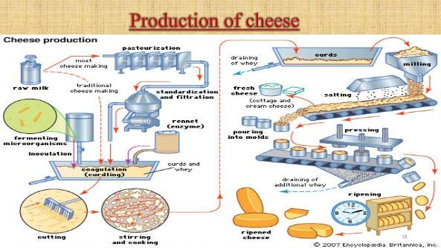 status and scope of cheese industry Oil Processing Diagram