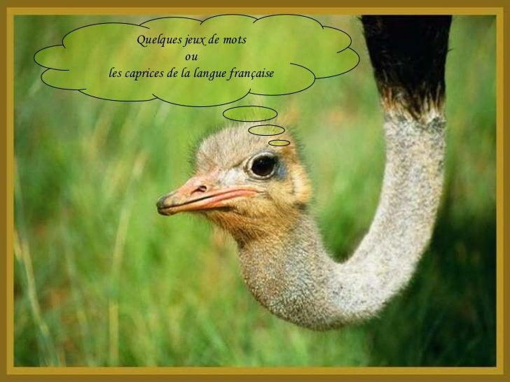 Quelques jeux de mots ou les caprices de la langue française