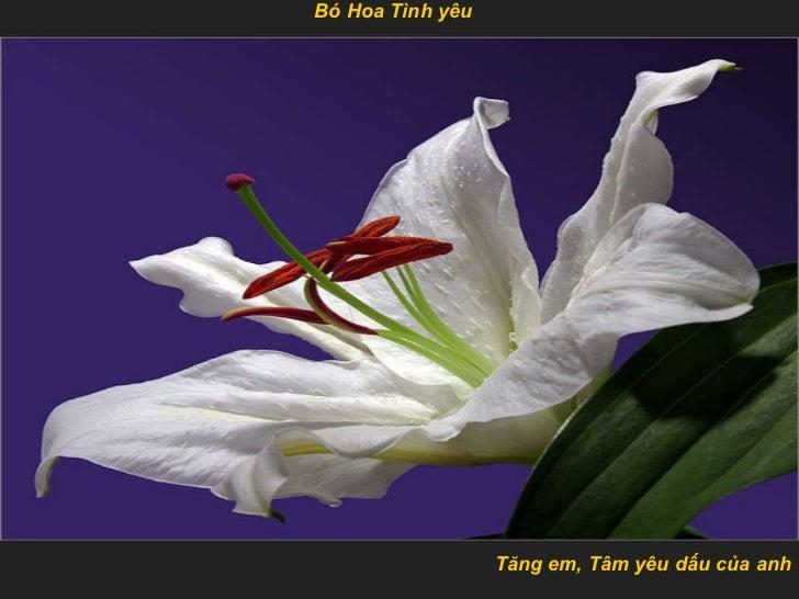 Tăng em, Tâm yêu dấu của anh Bó Hoa Tình  yêu