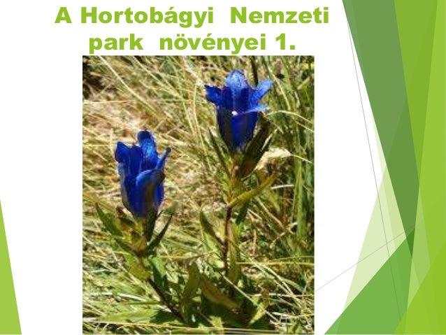 A Hortobágyi Nemzeti park növényei 1.