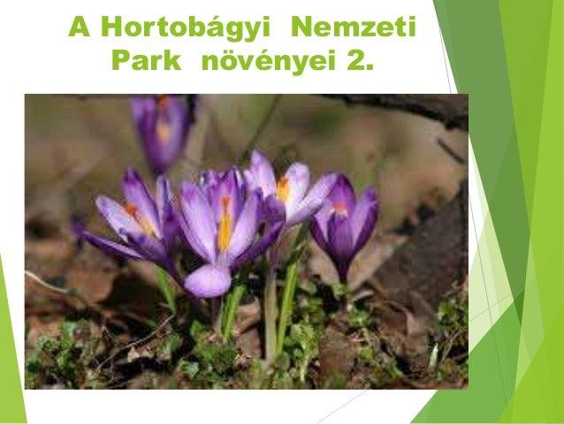 A Hortobágyi Nemzeti Park növényei 2.