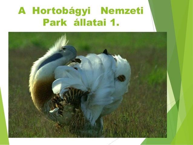 A Hortobágyi Nemzeti Park állatai 1.