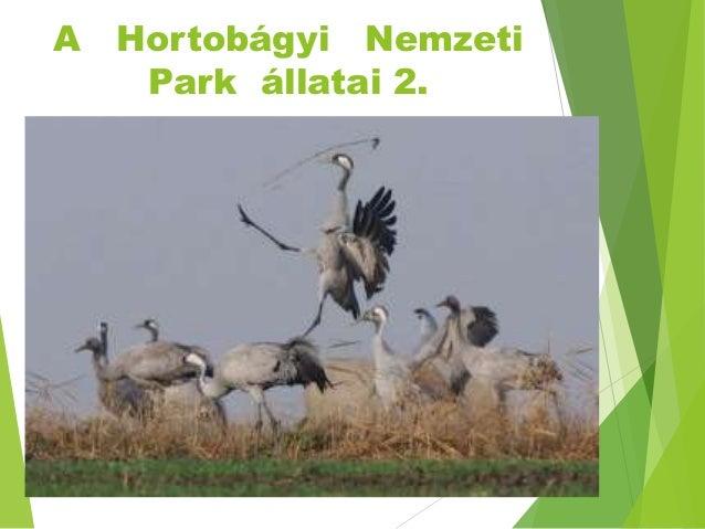 A Hortobágyi Nemzeti Park állatai 2.
