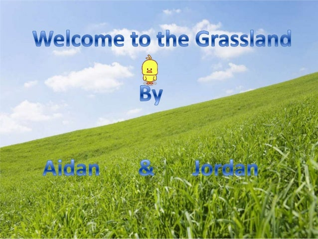 A biome is a global biotic community that is like a grassland or desert that has plant life and prevailing climate.