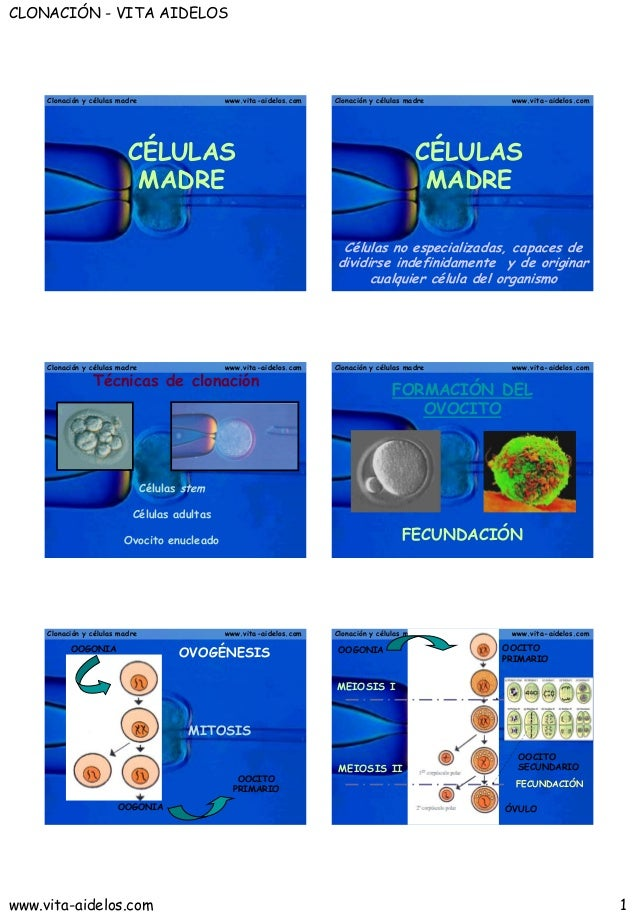 CLONACIÓN - VITA AIDELOS     Clonación y células madre                  www.vita-aidelos.com   Clonación y células madre  ...