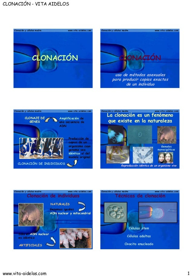 CLONACIÓN - VITA AIDELOSwww.vita-aidelos.com 1Clonación y células madre www.vita-aidelos.comCLONACIÓNClonación y células m...
