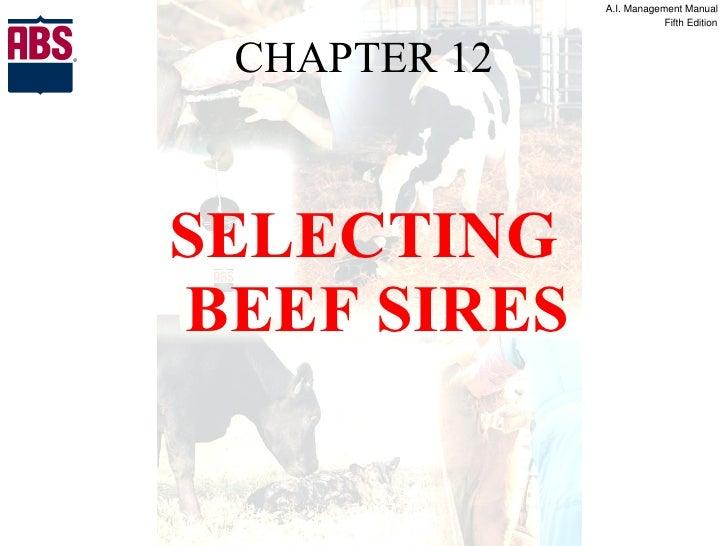 CHAPTER 12 <ul><li>SELECTING BEEF SIRES </li></ul>