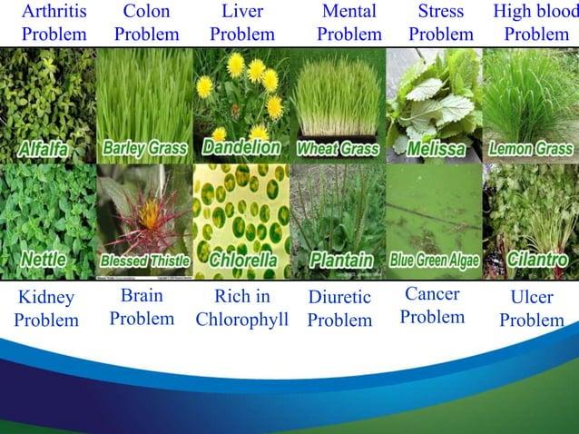 12 Herbs & Specialty Nutrients Siberian Eleuthero Inositol Choline (as Choline Bitartrate) PABA (Para Aminobenzoic Acid) R...